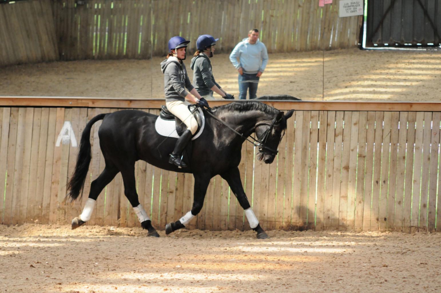 Veliko jahačev se ne zaveda, da so glave njihovih konj za vertikalo. (Foto: flickr.com)