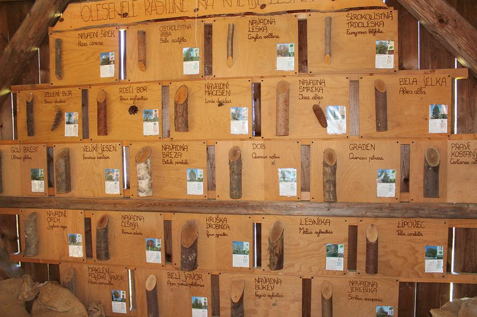 Na kozolcu so razstavljene različne drevesne vrste, ki rastejo na posestvu.