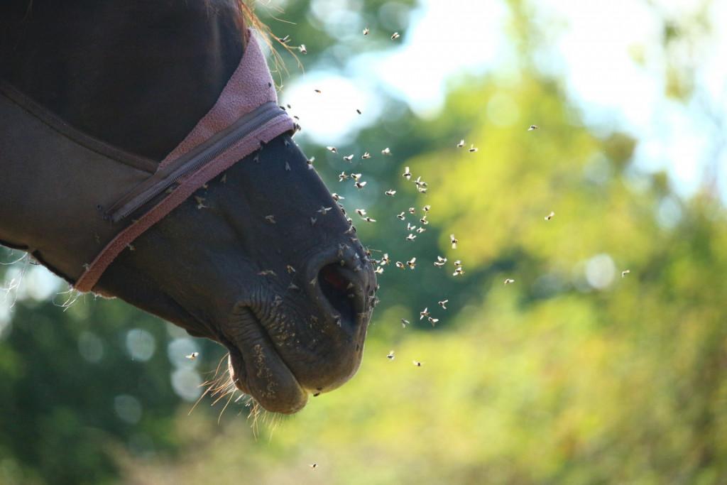 Muhe je dobro zatirati, saj so prenašalke številnih bolezni in širijo umazanijo.