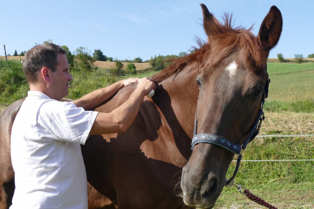 Konj sam pokaže, ko mu terapija ne ustreza več, aparat pa se na mestih težav ustavi, »prilepi«.
