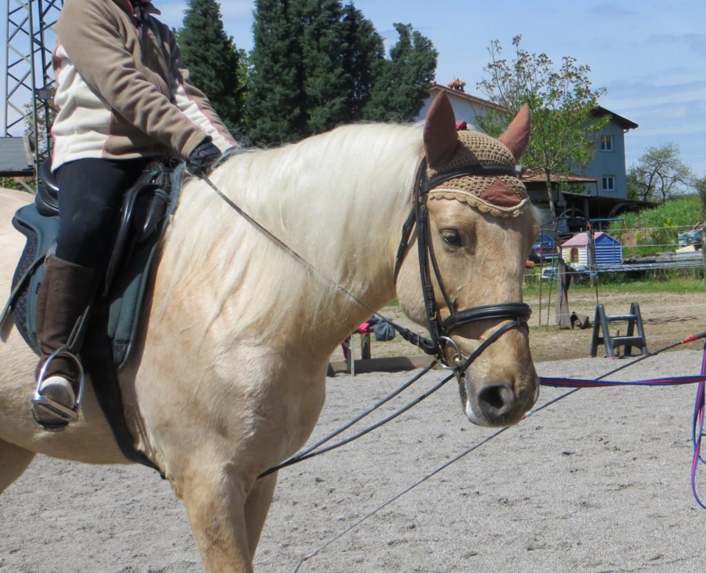 Na fotografiji je primer, ko elastike pomagajo konju do boljše drže in gibanja, predvsem zato, ker stabilizirajo nekonstanten kontakt z roko manj izkušenega jahača.