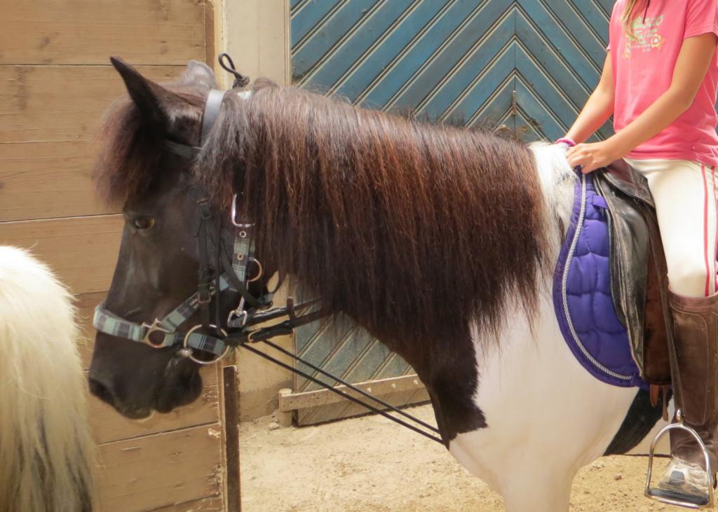 Primer, ko elastike nimajo nobenega učinka, da bi izzvale boljšo držo, ampak zaradi konstantnega pritiska povzročajo nenehno bolečino in delajo konja neobčutljivega na delovanje vajeti. To potrjuje tudi obrazna mimika konja, ki prazno strmi predse.