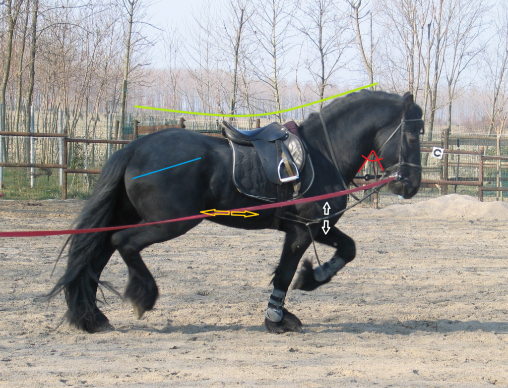 Fiksne stranske vajeti v tem primeru ustvarjajo napetosti v zatilju, zato konj ne more pravilno uporabiti mišic vratu in baza vratu je potisnjena navzdol. Kar pomeni, da ne more aktivirati centra telesa in dvigniti hrbta, zato da bi se energija zadnjih nog pravilno prenesla naprej. Z napetim zatiljem se je naučil izogibati premočnemu, togemu kontaktu in potisniti večji del teže na sprednji del.