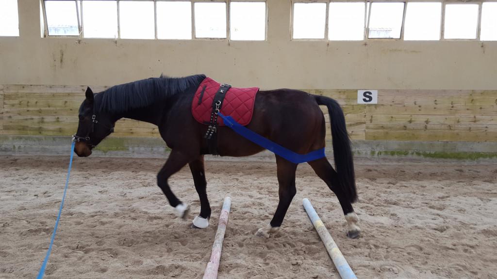 Bandaža za zadnjim delom konja ni pripomoček za lonžiranje, temveč zelo uporaben pripomoček pri rehabilitaciji konj, za boljše ozaveščanje konjevega zaznavanja lastnega telesa.  <br> <br>