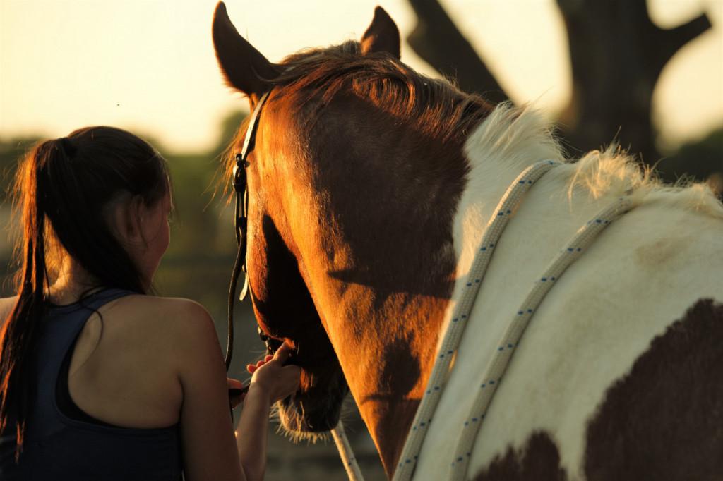 Če imate konja v domači oskrbi, potem se lahko štejete za enega izmed najsrečnejših Zemljanov, saj lahko preživite dodaten čas s tistim, ki ga imate najraje, in to brez nevarnosti okužbe.