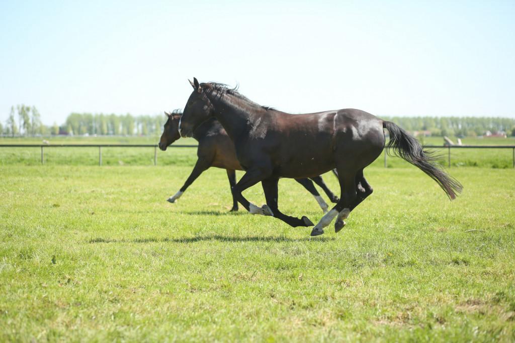 Življenje zunaj mladim konjem omogoča dober začetek v življenju.