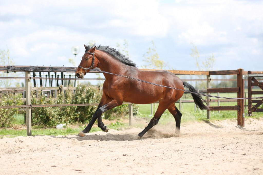 Mladi konji in plemenske kobile so deležni pravilnega in zdravega treninga. <br> <br>