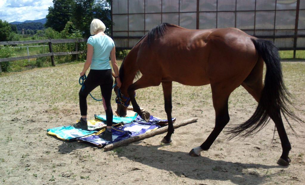 Raznoliko delo spodbudi tako konjevo telo kot njegov um in razvija njegovo samozavest in veselje do dela.