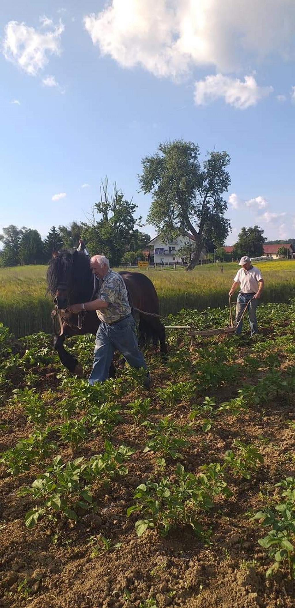 Delo s konjem po starem
