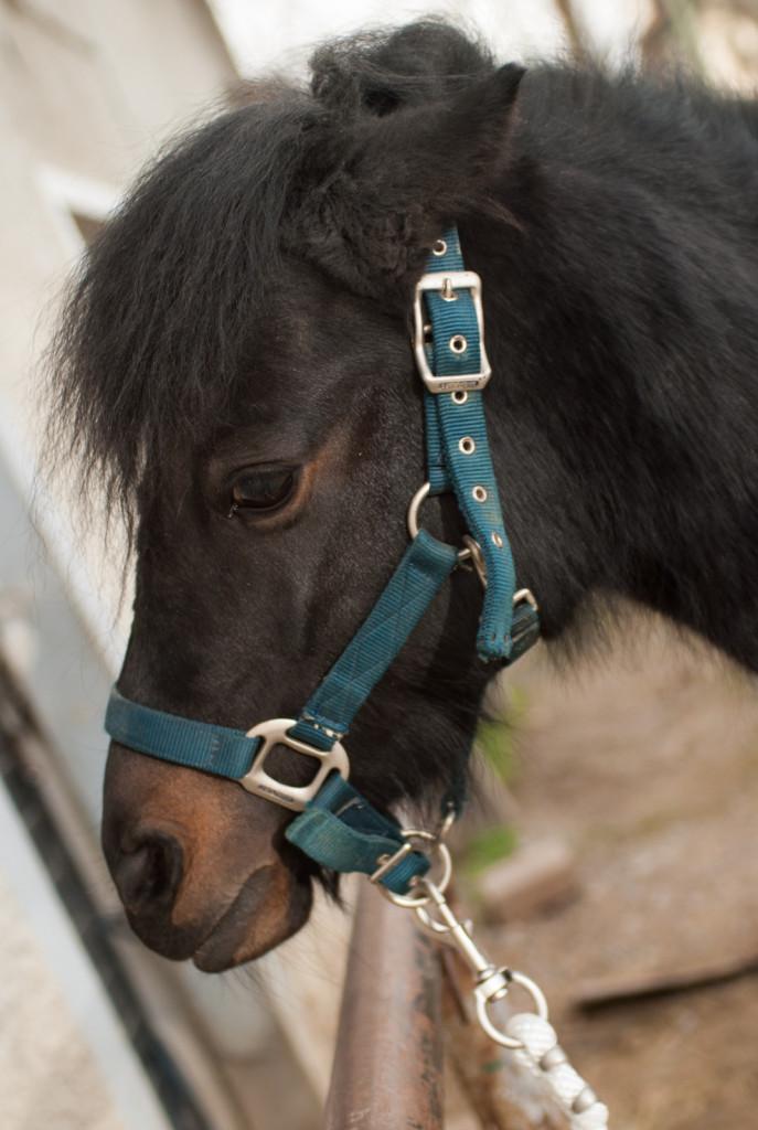 Vedno bodimo pozorni na izraz na konjevem obrazu in na to, kaj nam sporoča.