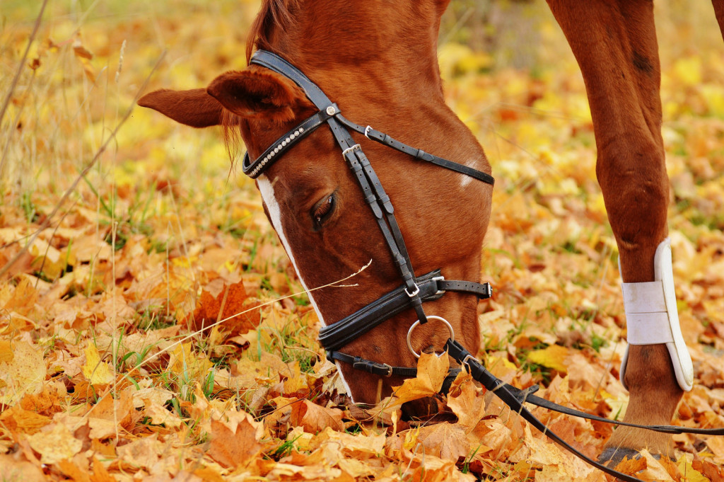 Čaka nas še dolga pot, vendar se postopoma pojavljajo pozitivne spremembe na področju dobrobiti konj.