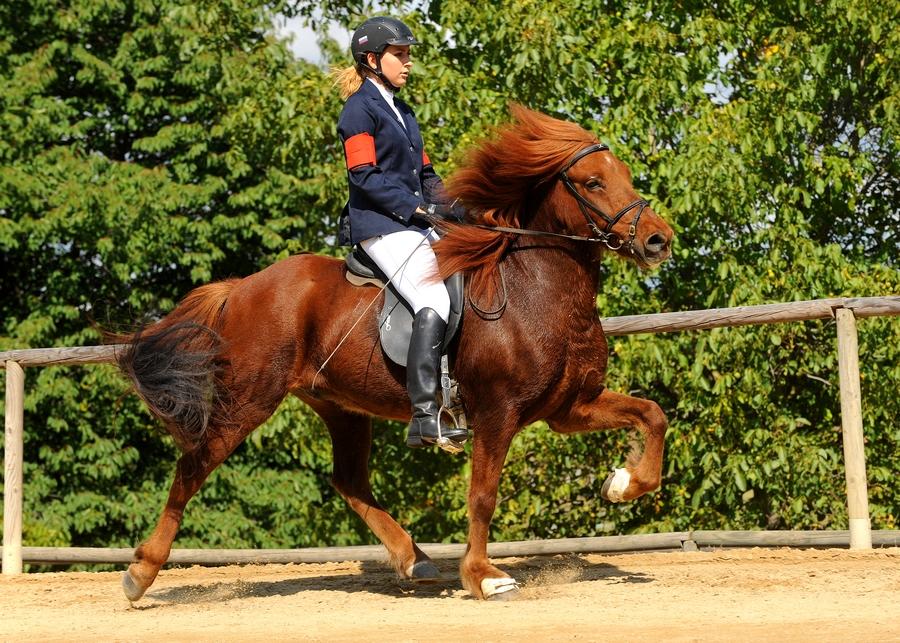 Oprema konja in oblačila jahača morajo biti v skladu s pravilnikom.