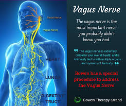 Bowen Therapies Vagus Nerve Procedure... - Bowen Therapy Strand | Facebook