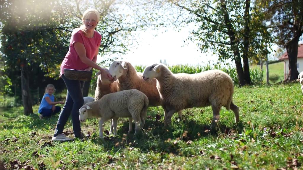 Ani in Alji so tudi ovce v veliko veselje.