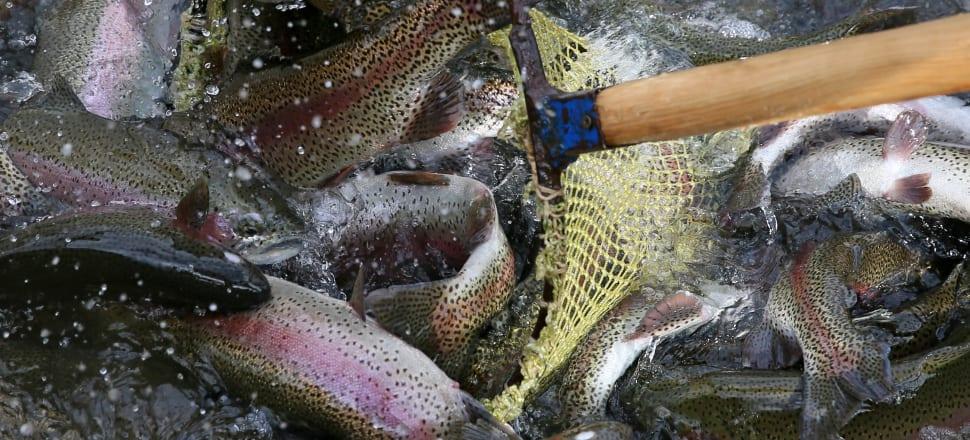 Vzrejo rib bo treba povečati
