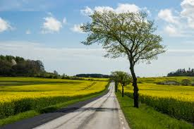 File:Country road and yellow field.jpg - Wikimedia Commons
