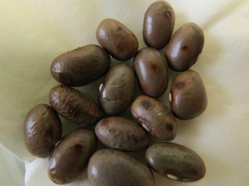 Z okuženim semenom se lahko prenašajo različne bolezni.