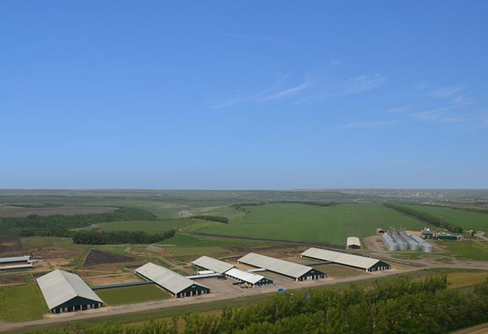 EkoNiva-APK je vodilna v prireji mleka v Rusiji in Evropi. Skupaj je na farmi približno 203.300 glav, vključno s 105.000 kravami molznicami (na dan 11.01.2021). V zadnjih nekaj letih je podjetje obstoječe mlekarne rekonstruiralo in nadgradilo z uporabo najsodobnejših živinorejskih praks.<br> Devetindevetdeset odstotkov mleka, ki ga priredi EkoNiva, se prodaja kot mleko Premium (najvišji razred po kakovosti v ruskem sistemu klasifikacije). Danone Group, Tulskiy Molochny Kombinat OJSC in Liskinskiy Gormolzavod LLC so nekateri partnerji-predelovalci, ki sodelujejo z EkoNivo. Mleko EkoNiva se pošlje tudi v sirarno za predelavo sira Hochland.<br>