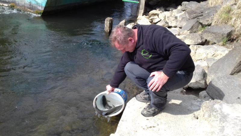 Ribe vrste sulec so v Muro spustili sploh prvič.<br> <br>