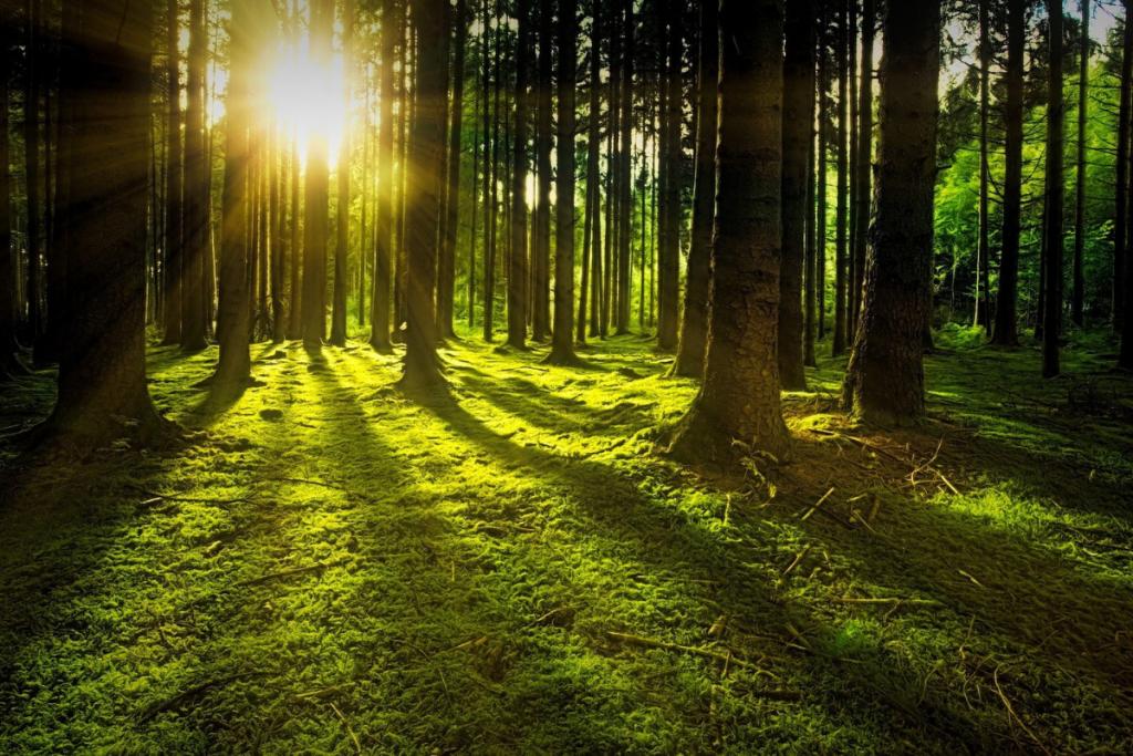 Kljub temu, da Slovenijo pokriva 60 % gozda, je lesarska in gozdarska dejavnost zamrla, je pozabljena in nič več cenjena. / vir slike: Pixabay.