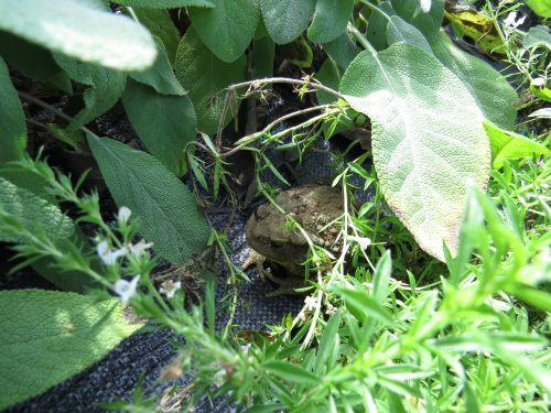 <br>V novi sezoni naj se v našem vrtu dobro počutile tudi koristne vrste.
