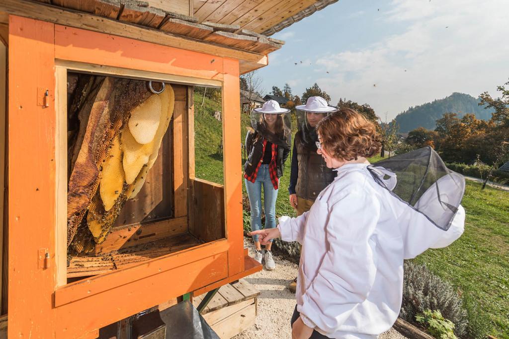 Obiskovalci so navdušeni nad prikazom življenja čebel v panju. (Foto: Jošt Gantar)
