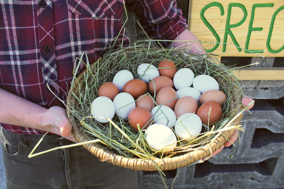 Jajčna srečnih kokošk