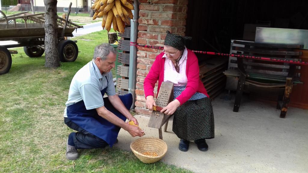 Nada Puconja je ročno luščila koruzo, pomagal ji je gospodar Grünta Milan Košnik.