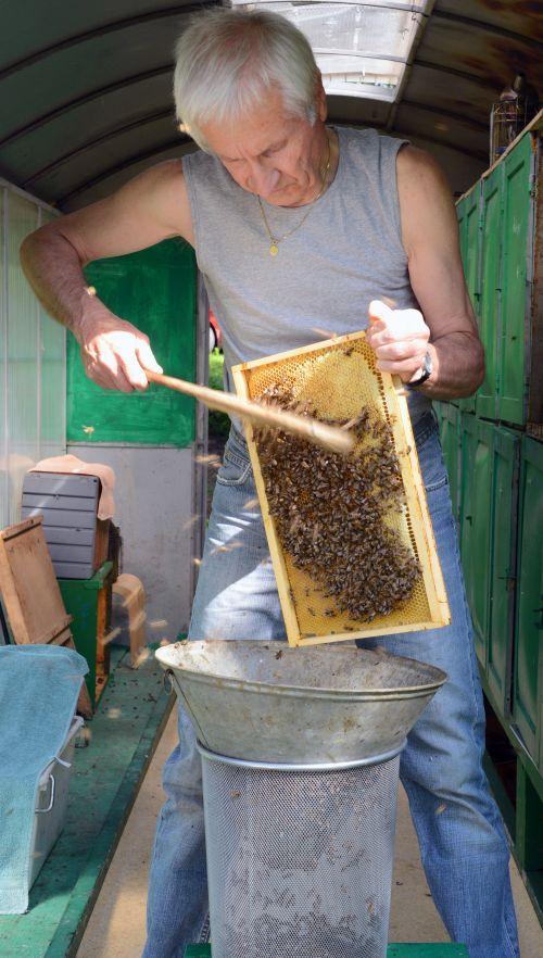 Ometanje čebel s sata v žično košaro