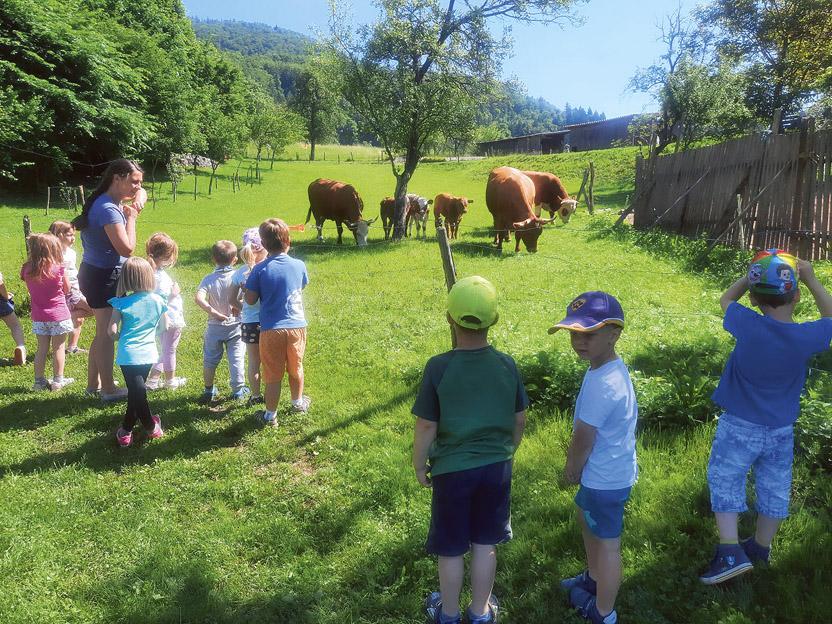 Prešteli smo kravice in njihove teličke.