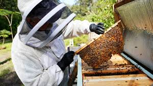 Hillsborough beekeeper finds caring for his hives is a constant education